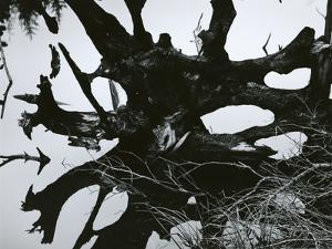 Water and Tree Reflection, 1968 by Brett Weston