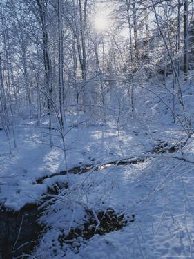 Black Hills Regional Park, Winter View with Snow by Brian Gordon Green