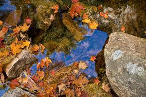 Brilliant Orange Leaves Resting on Rocks in the Fall by Brian Gordon Green