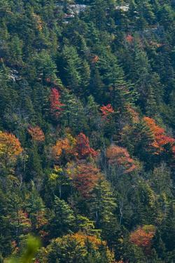 Fall Colors on Mount Desert Island by Brian Gordon Green