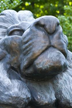 Head of a Male Lion Statue by Brian Gordon Green