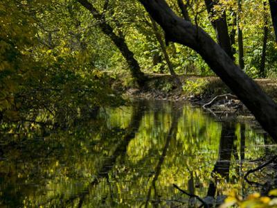 Trees Reflected in the Water of the C and O Canal Near Dickerson by Brian Gordon Green