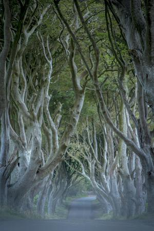 18th Century Beech Tree Lined Road known as Dark Hedges, County Antrim, Northern Ireland by Brian Jannsen