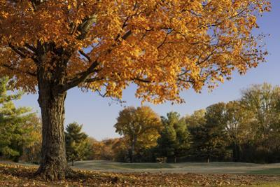 Autumn colors in Brentwood, Tennessee, USA by Brian Jannsen
