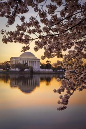 Cherry blossoms and the Jefferson Memorial at dawn in Washington DC, USA by Brian Jannsen