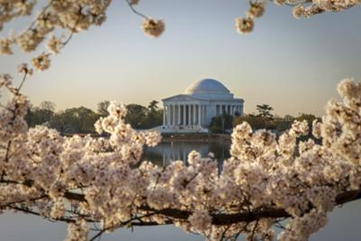 Cherry blossoms at dawn with the Jefferson Memorial, Washington DC USA by Brian Jannsen