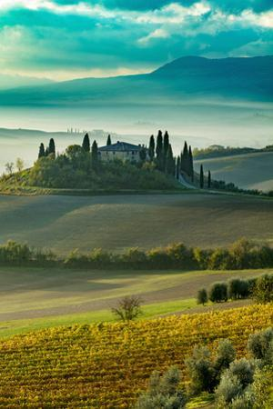 Early morning over vineyard and the Belvedere, San Quirico d'Orcia, Tuscany, Italy by Brian Jannsen