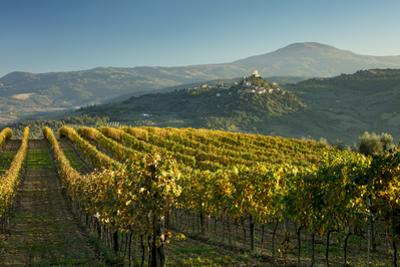 Evening view over vineyards to Rocca d'Orcia, Tuscany, Italy by Brian Jannsen