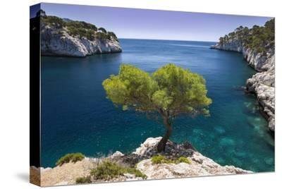 Lone Pine Tree Growing Out of Solid Rock, Calanques Near Cassis, Provence, France by Brian Jannsen
