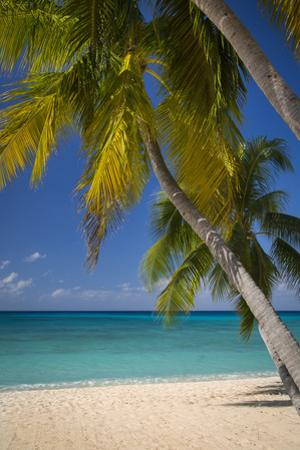Seven Mile Beach, Grand Cayman, Cayman Islands, West Indies by Brian Jannsen