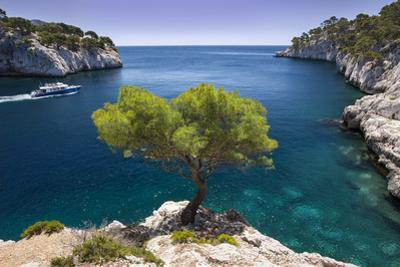 Tour Boat, Lone Pine Tree in the Calanques Near Cassis, Provence, France by Brian Jannsen