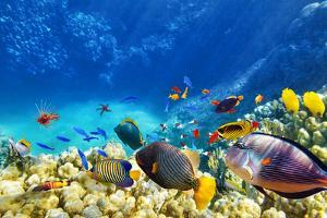 Wonderful and Beautiful Underwater World with Corals and Tropical Fish. by Brian Kinney