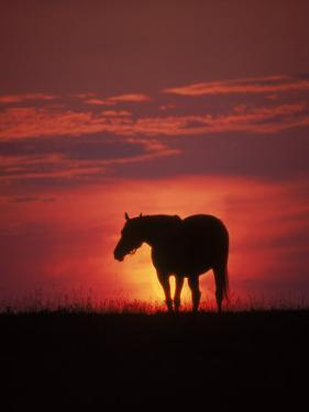 Silhouette of Horse at Sunset, Lexington, KY by Brian Maslyar
