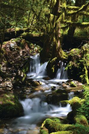 Falls in the Forest I by Brian Moore