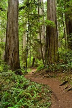 Hiking Trail I by Brian Moore