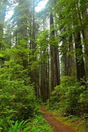 Hiking Trail II