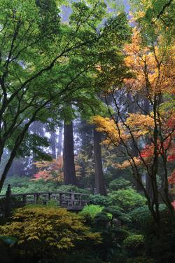 Japanese Gardens III by Brian Moore
