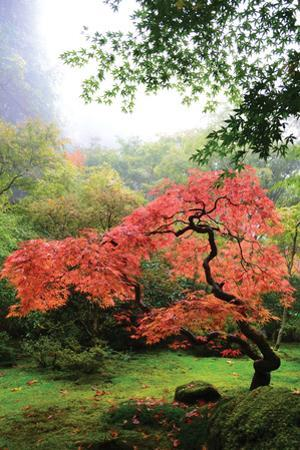 Japanese Gardens IV by Brian Moore