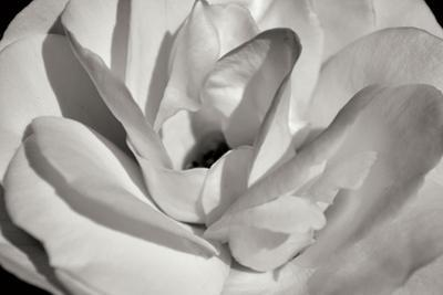 Macro Flower I by Brian Moore