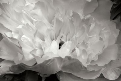 Macro Flower II by Brian Moore