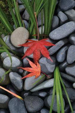 Maple Leaves I by Brian Moore