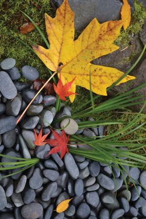 Maple Leaves II by Brian Moore