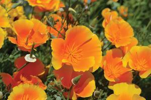 Orange Flowers by Brian Moore