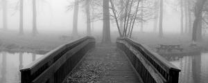 Bridge to Mist