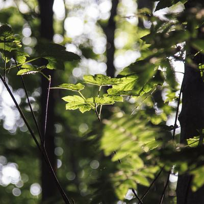 https://imgc.allpostersimages.com/img/posters/bright-green-fresh-foliage-in-the-forest-in-the-sunlight_u-L-Q1EXNLW0.jpg?artPerspective=n