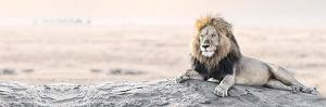 Bright Wildlife - Lion