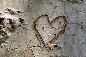 Carved Heart in Bark of a Tree by Brigitte Protzel