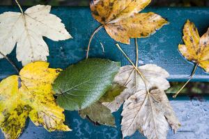 Leaves, Park-Bank, Detail by Brigitte Protzel