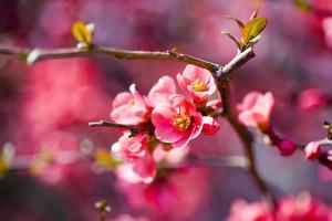 Spring-Bloom by Brigitte Protzel