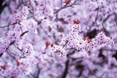Spring-Bloom
