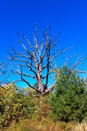 Brilliant Blue Sky with Dead Tree Silhouette Photo Poster