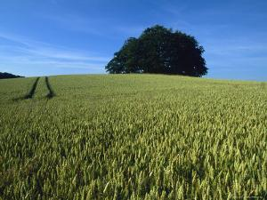 Denmark: a Wheat Field in Denmark, An Ancient Burial Ground by Brimberg & Coulson