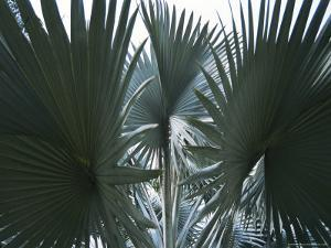Singapore: Palm Trees in a Public Park by Brimberg & Coulson