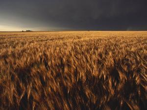Summer Thunder Storm Approaches Wheat Field, Kansas by Brimberg & Coulson