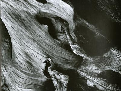 https://imgc.allpostersimages.com/img/posters/bristlecone-pine-california-1977_u-L-Q1G6LLA0.jpg?p=0