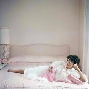 British actress Joan Collins in a pink bedroom with a pink toy poodle (photo)