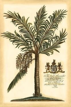 British Colonial Palm II