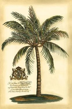 British Colonial Palm III