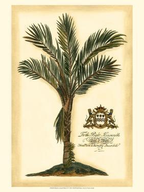 British Colonial Palm IV