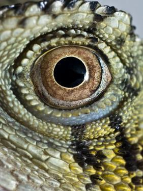 Abstract Close Up of an Eastern Water Dragon's Eye by Brooke Whatnall