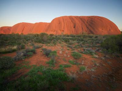 Ayers Rock (Uluru), in Evening Light with Bush in Foreground