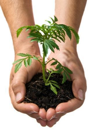 Hands Holding Seedling Planted in Soil Out Towards Viewer
