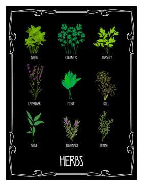 Garden Herbs by Brooke Witt