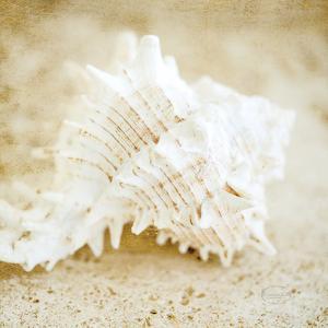 Golden Seashore Shells by Brookview Studio