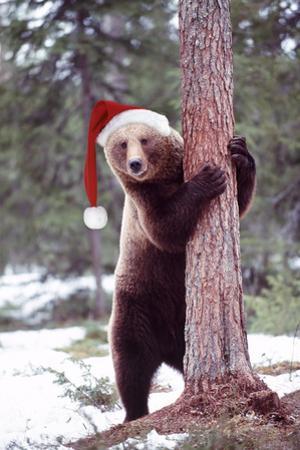 Brown Bear Hugging Tree, Wearing Christmas Hat