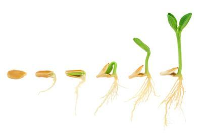 Sequence Of Pumpkin Plant Growing Isolated Evolution Concept by brozova